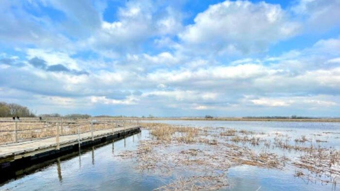 Cover for See The Sky Go Dark With Clouds Of Waterfowl On Wisconsin's 50-Mile Horicon Marsh Auto Tour