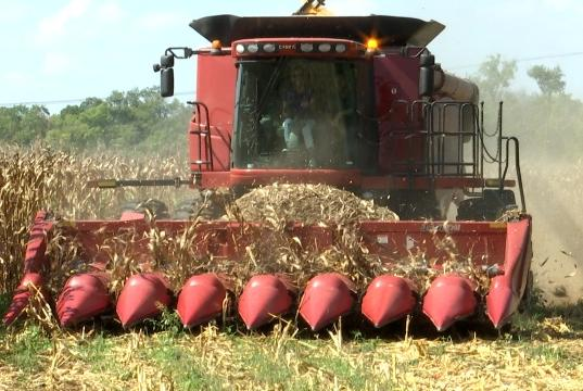 Picture for 'We felt like we were going to have a good crop': Farmers see an exceptional start to harvest season