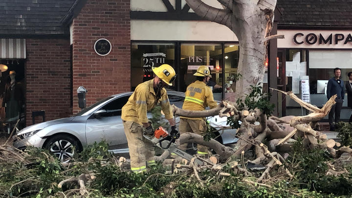 Cover for Santa Ana Winds Knocked down Tree onto Parked Vehicles Below