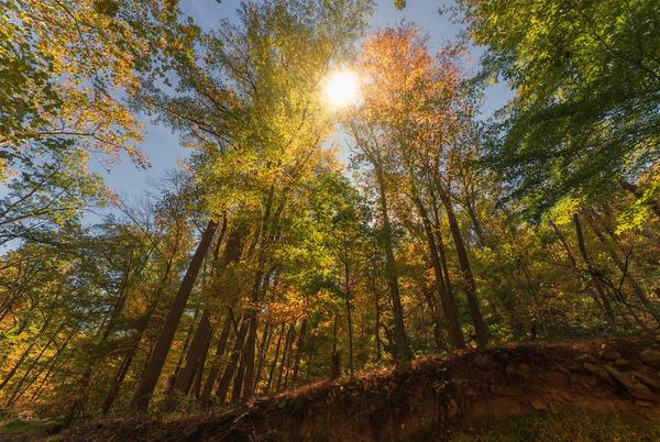 Picture for Wednesday's autumnal equinox heralds the arrival of a darker and colder season
