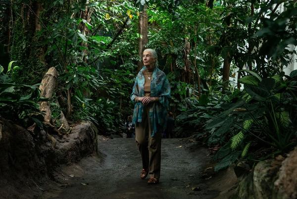 Picture for Jane Goodall joins campaign to plant a trillion trees by 2030