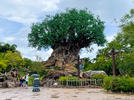 Picture for Wait, Disney Castles Are Hidden On a Map in Animal Kingdom's Priciest Restaurant?