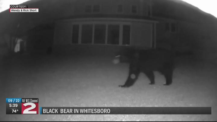 Cover for Black bear sighting in Whitesboro backyard