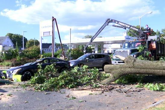 Picture for Large tree falls on cars at red light in Springfield