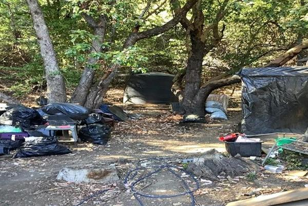 Picture for Environmental Crimes Found on Willits Grow Where CDFW Eradicated 1.45 Tons of Processed Cannabis and 3,800 Plants