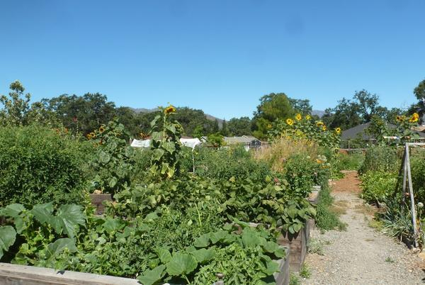 Picture for Feeding Ourselves, Feeding the County: A Story of the Middletown Community Garden