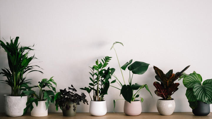 Cover for Three house plants you should have in your home