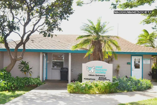 Picture for Maui Humane Society hosting first adoption event since pandemic began