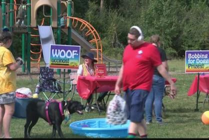 Picture for Woofstock raises money for no-kill animal shelter