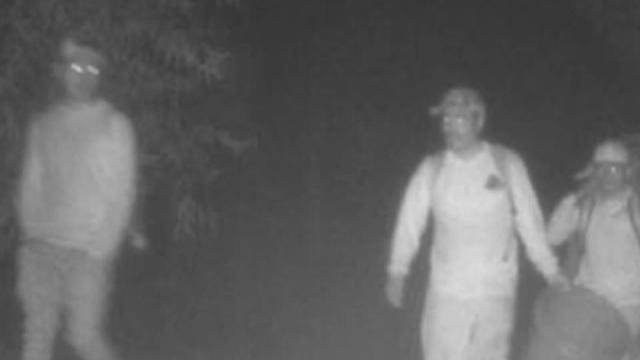Picture for Security camera catches men illegally picking berries