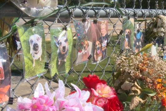 Picture for Georgetown petition nears 15,000 signatures, supporting change after pet resort fire