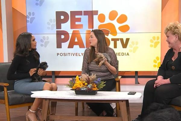 Picture for Pet Pals TV: Paws & Think