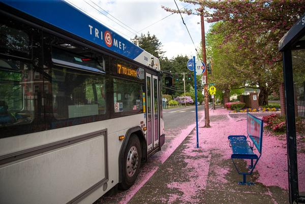 Picture for TriMet faces driver shortage as it looks to rebuild from pandemic