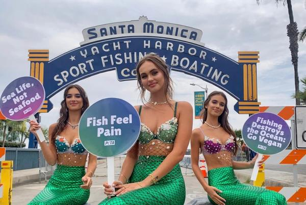 Picture for A PETA Mermaid Will Wash Ashore on Fort Lauderdale Beach Today With Free Vegan Crab Cakes