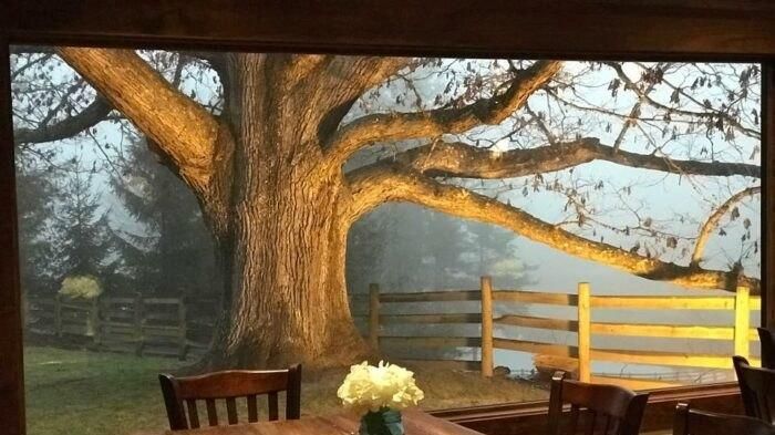Cover for Dine In The Shade Of An 800-Year-Old Tree At The Oak Restaurant In West Virginia