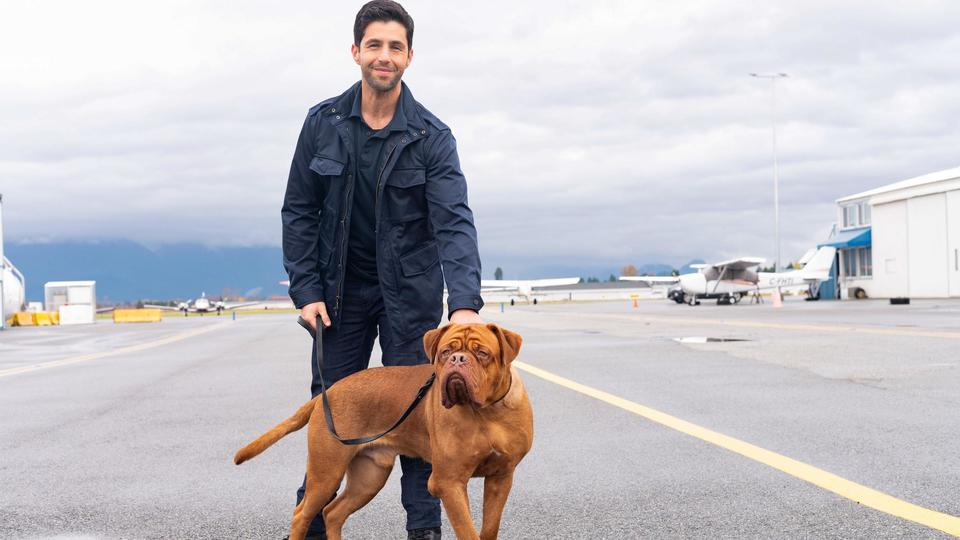 Picture for Turner & Hooch review – the droolsome twosome are back with a 21st-century dogmance