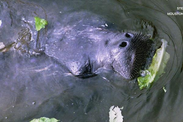 Picture for What critters live in Houston's bayous?