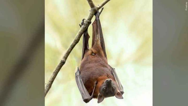 Cover for Bat tests positive for rabies in Livingston County