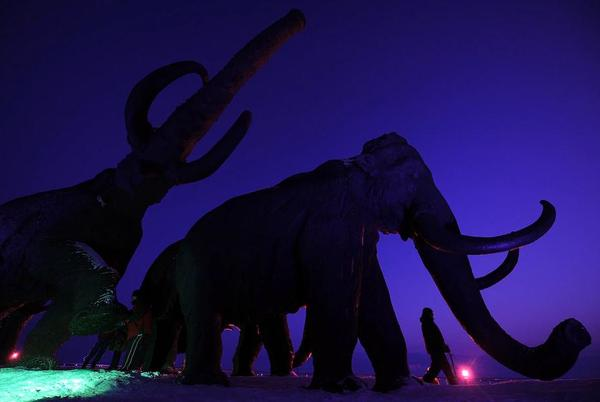 Picture for These scientists want to bring back the woolly mammoth. Ethicists aren't so sure.