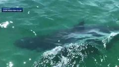 Cover for 'It's amazing!' Kids exploring Massachusetts coast spot three great white sharks