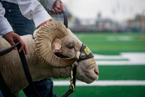 Picture for Colorado State defense dominates in upset win at Toledo