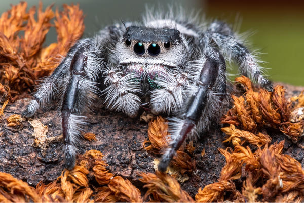 Picture for Some Spiders In Texas Can Kill You. Here's What You Need To Know
