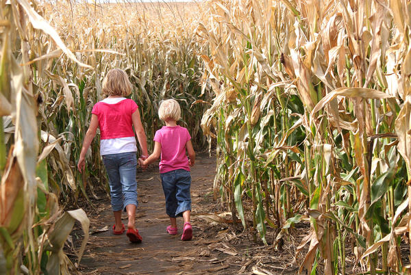 Picture for Local Corn Maze Named One of The Best in Missouri