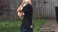 Cover for Wilkes-Barre police seek assistance to identify alleged dog thief