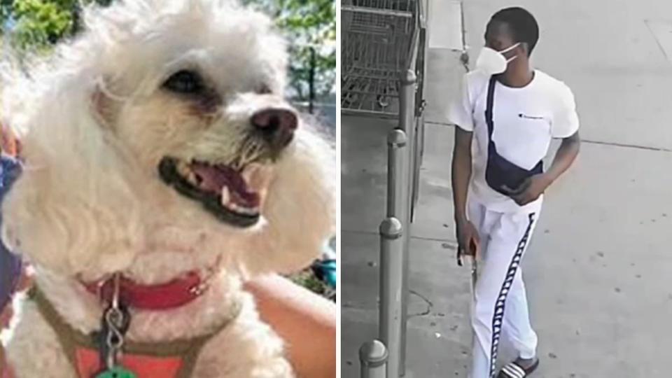 Picture for Beloved therapy dog found after carjacking in Brooklyn