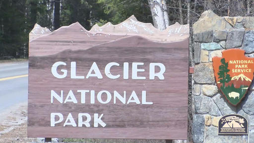 woman injured after colliding with bear while running on montana trail news break news break