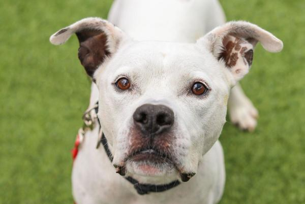 Picture for Pet of the Day: Moscato