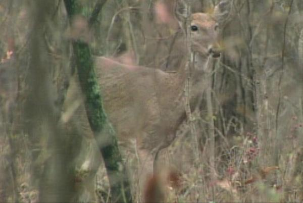 Picture for USDA releases new information surrounding deer contracting Covid-19