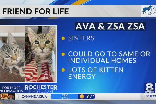 Picture for Friend for Life: Meet Ava and Zsa Zsa