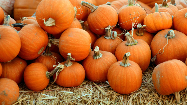 Cover for The leaves are a-changing: How to enjoy the start of fall across Santa Clara County
