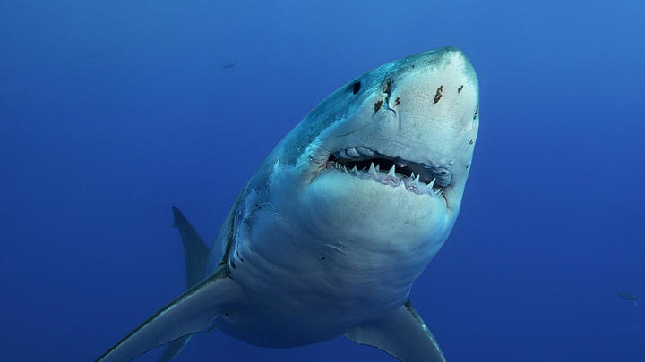 Cover for Where Does New York State Rank For Shark Attacks?