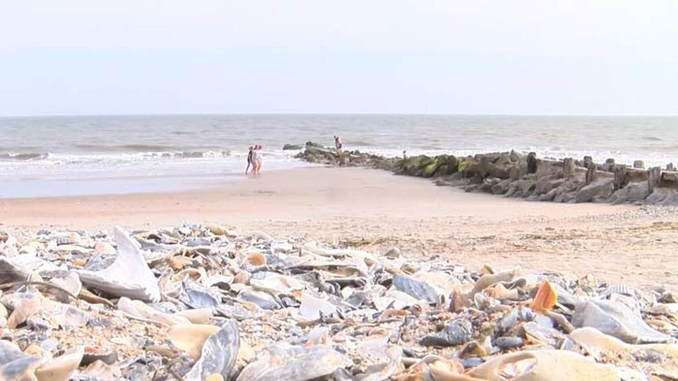 Edisto Beach To Discuss Possible Re