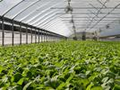 Picture for Power REIT Acquires 10-Acre Property in Crowley County for Greenhouse Development