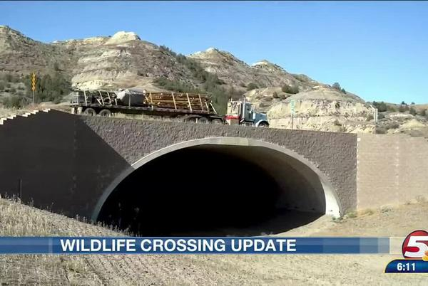 Picture for Animal crossing near Highway 85 helps save North Dakota wildlife