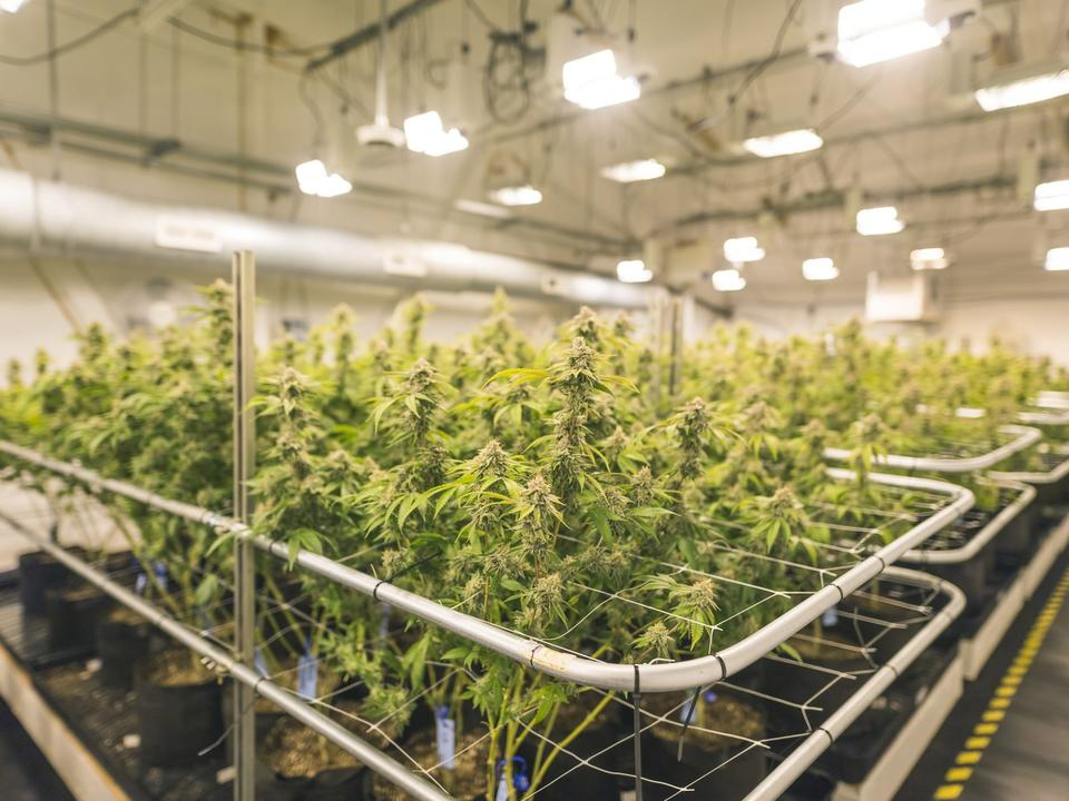 will-this-recently-announced-acquisition-make-canopy-growth-profitable-at-last
