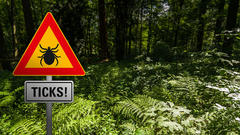 Cover for Record Number of Ticks Invading New York State This Summer