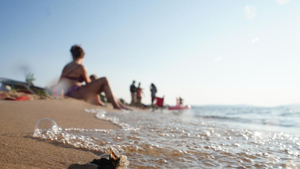 Picture for An estimated 300 trillion invasive mussels blanket Lake Michigan. Eradication may be impossible, but small-scale removal efforts could be the answer.