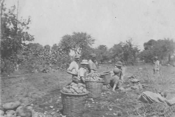 Picture for History: Photos of Historical Farms on Long Island