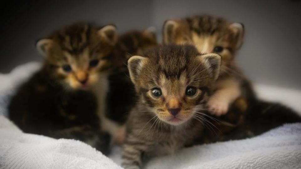 Picture for Six orphaned kittens rescued from storm drain in New York
