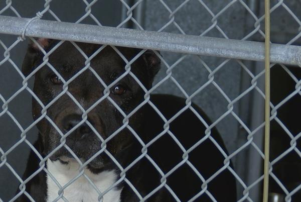 Picture for NHSO sees increase in owner surrenders at animal shelter