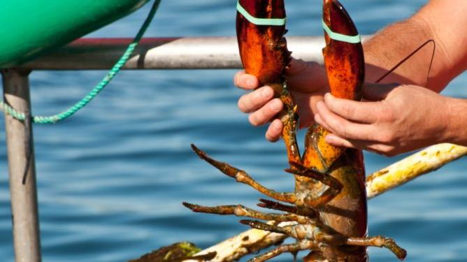 Picture for Miami man arrested in the Keys for lobster violations