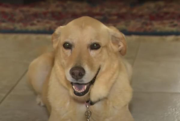 Picture for 74-Year-Old Jumps On Top Of Alligator To Save Golden Retriever