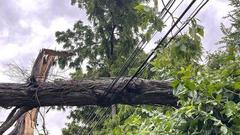 Cover for Evergy: 100 power poles snapped during severe weather on Friday