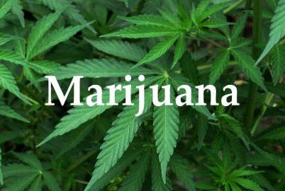 Picture for Watertown's medical marijuana dispensaries could result from random drawing (Audio)