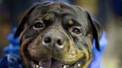 Cover for Ingham Animal Control to hold dog vaccination clinic