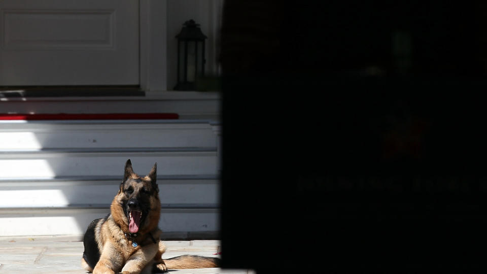 Picture for President Biden's Dog Champ Has Died, White House Says